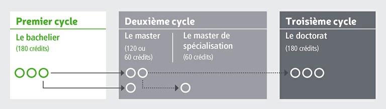 Cycles d'études