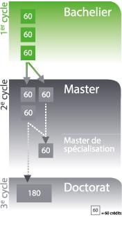 Structure des études