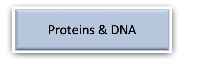 Proteins & DNA